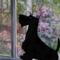 Scottish terrier dog vector 21619612 1569695333235 thumb48
