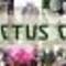 Exotic_Cactus's profile picture