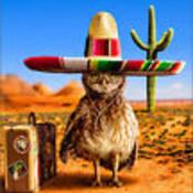 Undersombrero's profile picture