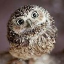 owl_sell_that's profile picture