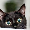 catgirl777's profile picture