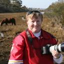 WildPonyPhotos's profile picture