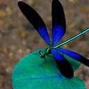 Sixdragonflies's profile picture
