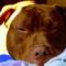 DracoStore's profile picture