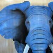 Blue_elephant_finds's profile picture