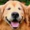 gared4477's profile picture