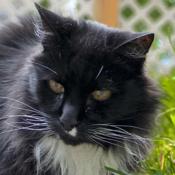 Criminal_Cats_Design's profile picture