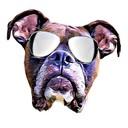 Ritmoboxer's profile picture