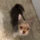 LOUIE19's profile picture