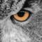 theGreekOwl's profile picture