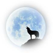 gordon412's profile picture