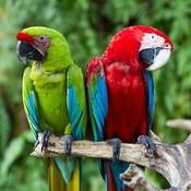 Crazyaboutbirds's profile picture