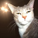 BossKitty's profile picture