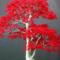 Bonsai_seed's profile picture