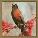 Robin1's profile picture