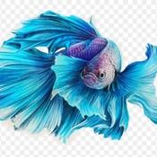 IlhamP14's profile picture