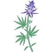 FlowerStampede's profile picture