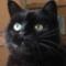 catsouttathehandbag's profile picture