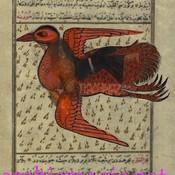ArabicMagic's profile picture