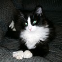 Gozerscloset2's profile picture