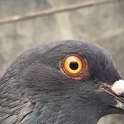 OjanJ's profile picture