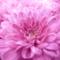 YanP18's profile picture