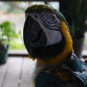 pirates_trunk's profile picture