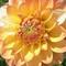 flowersgarden's profile picture